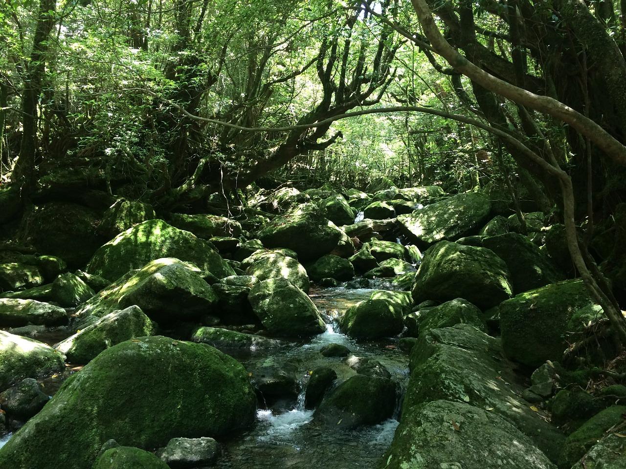 Wald Yakushima Mononoke